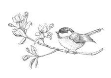 Πουλί σε έναν κλάδο με τα λουλούδια που χρωματίζονται με το χέρι εκλεκτής ποιότητας κάρτα με ένα πουλί επίσης corel σύρετε το διά Στοκ Εικόνες