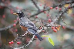 Πουλί σε ένα δέντρο Στοκ φωτογραφίες με δικαίωμα ελεύθερης χρήσης