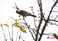 Πουλί σε ένα δέντρο Στοκ εικόνα με δικαίωμα ελεύθερης χρήσης