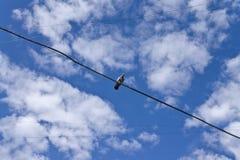 Πουλί σε ένα καλώδιο Στοκ Φωτογραφίες