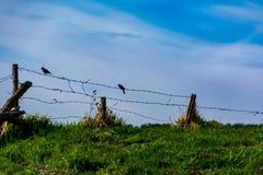 Πουλί σε ένα καλώδιο Στοκ φωτογραφία με δικαίωμα ελεύθερης χρήσης