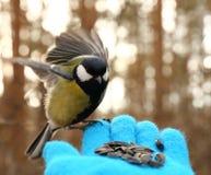 Πουλί σε ετοιμότητα μου Στοκ φωτογραφίες με δικαίωμα ελεύθερης χρήσης