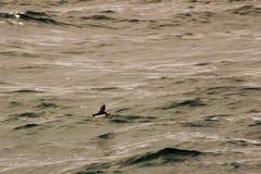 Πουλί σε μια πτήση Στοκ φωτογραφία με δικαίωμα ελεύθερης χρήσης