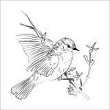 Πουλί σκίτσο Στοκ φωτογραφία με δικαίωμα ελεύθερης χρήσης
