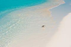 Πουλί στην ακτή του παραδείσου Playa παραλιών του νησιού Cayo βραδύτατου, Κούβα Στοκ φωτογραφία με δικαίωμα ελεύθερης χρήσης