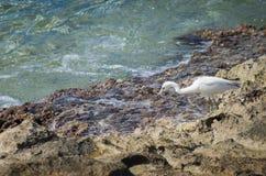 Πουλί στην ακτή Στοκ εικόνες με δικαίωμα ελεύθερης χρήσης
