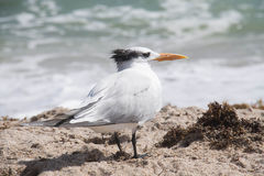 Πουλί στην παραλία Στοκ εικόνες με δικαίωμα ελεύθερης χρήσης