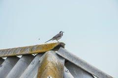 Πουλί στη στέγη ενός σπιτιού στο μπλε ουρανό Στοκ φωτογραφία με δικαίωμα ελεύθερης χρήσης