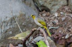 Πουλί στη φύση Στοκ Φωτογραφίες