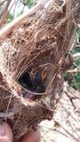 Πουλί στη φύση Στοκ Φωτογραφία
