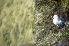 Πουλί στον απότομο βράχο Στοκ εικόνες με δικαίωμα ελεύθερης χρήσης
