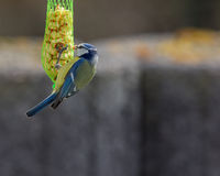 Πουλί στον κήπο στοκ εικόνα με δικαίωμα ελεύθερης χρήσης