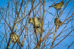 Πουλί στον κλάδο του οπωρωφόρου δέντρου Στοκ Εικόνες