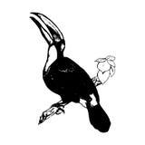 Πουλί στον κλάδο Toucan - γραφικό Στοκ Εικόνα