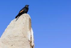 Πουλί στο βράχο στοκ εικόνα με δικαίωμα ελεύθερης χρήσης