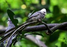 Πουλί στο ζωολογικό κήπο NC στοκ εικόνα