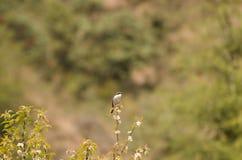 Πουλί στο θάμνο λουλουδιών Στοκ Φωτογραφίες