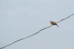 πουλί στο καλώδιο Στοκ Φωτογραφία