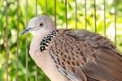 Πουλί στο κλουβί Στοκ φωτογραφία με δικαίωμα ελεύθερης χρήσης