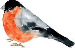 Πουλί σχεδίων Watercolor Στοκ Εικόνα