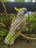 πουλί λυπημένο Στοκ Εικόνες