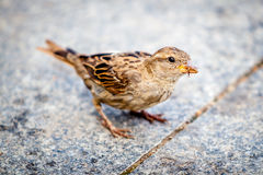 Πουλί Στοκ φωτογραφίες με δικαίωμα ελεύθερης χρήσης