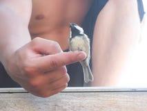 Πουλί Chickadee Στοκ Φωτογραφίες