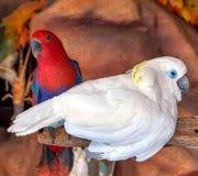 Πουλί Cockatoo στοκ εικόνες
