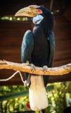 Πουλί Hornbill στο δέντρο Στοκ εικόνα με δικαίωμα ελεύθερης χρήσης
