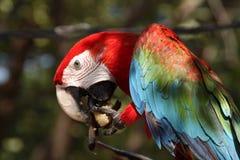 Πουλί Macaw στον κήπο Στοκ φωτογραφία με δικαίωμα ελεύθερης χρήσης