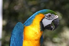 Πουλί Macaw στον κήπο Στοκ Εικόνες