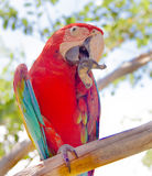Πουλί Macaw στοκ εικόνες