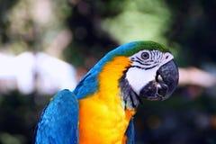 Πουλί Macaw Στοκ εικόνες με δικαίωμα ελεύθερης χρήσης