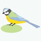 Πουλί Tit titmouse Διανυσματική απεικόνιση ενός πουλιού titmouse Στοκ Φωτογραφίες