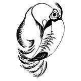 Πουλί Toucan (αφαίρεση) Στοκ φωτογραφία με δικαίωμα ελεύθερης χρήσης