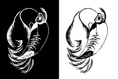 πουλί toucan Στοκ εικόνες με δικαίωμα ελεύθερης χρήσης