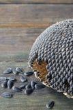 09 20 που γίνονται έτος ηλίανθων θεμάτων σπόρων Στοκ Εικόνες