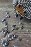 09 20 που γίνονται έτος ηλίανθων θεμάτων σπόρων Στοκ Φωτογραφίες
