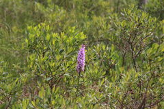 που επισημαίνεται orchid ρει&kapp Στοκ φωτογραφία με δικαίωμα ελεύθερης χρήσης
