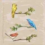 Πουλιά δέντρων στο κάθισμα των κλάδων Στοκ εικόνα με δικαίωμα ελεύθερης χρήσης