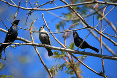 πουλιά λίγα τρία Στοκ εικόνα με δικαίωμα ελεύθερης χρήσης