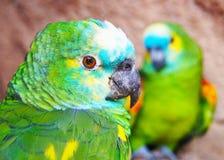 Πουλιά αγάπης και ένα δέντρο Στοκ Εικόνες