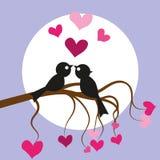 Πουλιά αγάπης ελεύθερη απεικόνιση δικαιώματος