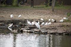 Πουλιά ακτών Στοκ φωτογραφίες με δικαίωμα ελεύθερης χρήσης