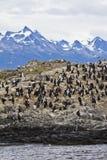 Πουλιά - αποικία κορμοράνων Στοκ φωτογραφίες με δικαίωμα ελεύθερης χρήσης