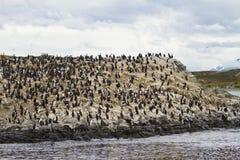 Πουλιά - αποικία κορμοράνων Στοκ Φωτογραφία