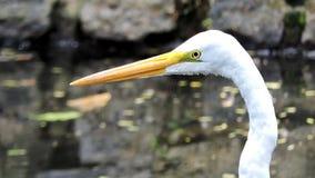 Πουλιά, γενικά γνωστά ως πουλιά ή πουλιά στοκ εικόνες