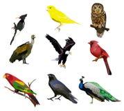 πουλιά επίθεσης πεινασμένα Στοκ Εικόνες