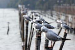 Πουλιά θάλασσας Στοκ φωτογραφίες με δικαίωμα ελεύθερης χρήσης