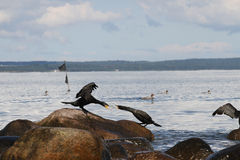 Πουλιά Ι Στοκ Εικόνα